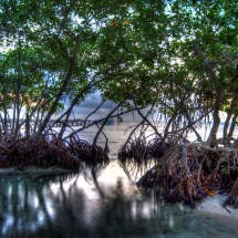 view of san pedro mangroves